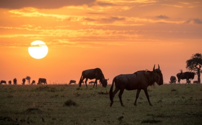 Preview: Best Time to Travel Maasai Mara