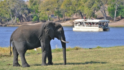 Preview: Best Time to Travel Botswana