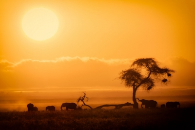 Preview: Best Time to Travel Kenya