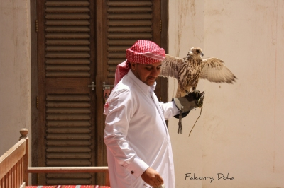Falconry, Doha, Qatar. (Jan Smith)  [flickr.com]  CC BY  License Information available under 'Proof of Image Sources'