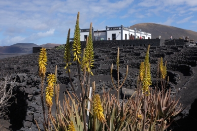 Preview: Best Time to Travel Lanzarote