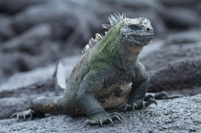 Preview: Best Time to Travel Galapagos Islands