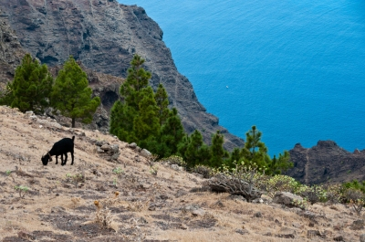 Preview: Best Time to Travel La Gomera
