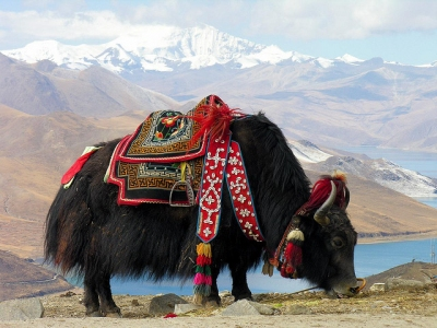 Preview: Best Time to Travel Tibet