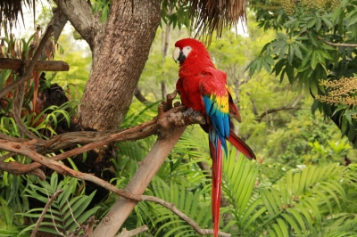 Tropical Rainforest Parrot (Jaime Olmo)  [flickr.com]  CC BY  License Information available under 'Proof of Image Sources'