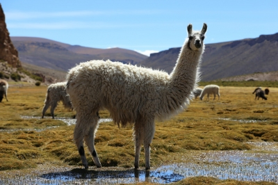 Preview: Best Time to Travel Bolivia